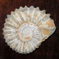 Sammelgebiete Fossilien