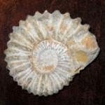 Sammelgebiet Fossilien